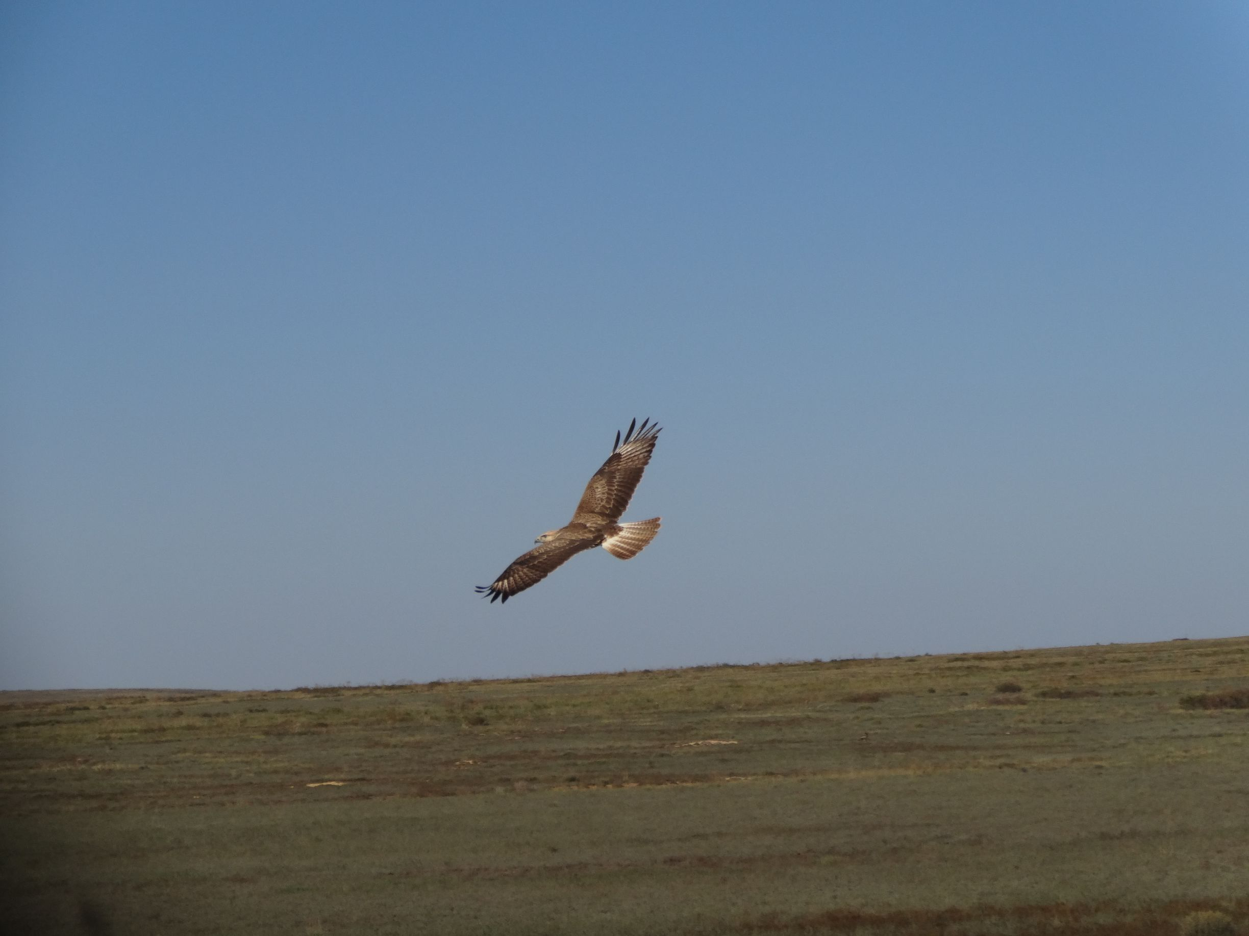 beautiful eagle flying next to us