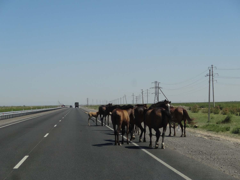 horses on the motorway!