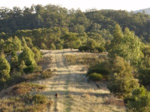 fast downhill with kangaroos