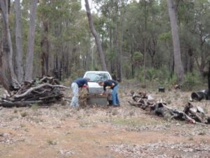 and arranging the firewood around the campfire area