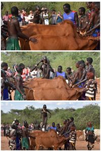 the young Hamer boy turns into a man after he successfully jumps the bulls several times