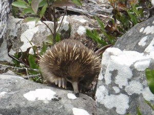 cute echidna wasn't bothered by us having lunch