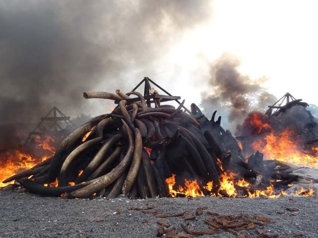 Kenya's ivory burn