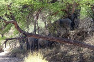 we watch the elephants as we have lunch