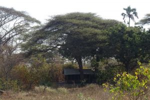 our tent in Katavi NP