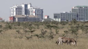 the Nairobi National Park, an amazing place where wild animals still roam