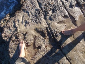 dinosaur prints at Gantheaume Point - yes, real ones!