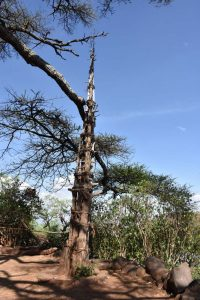 the totem in a Konso village, every generation a new tree is added
