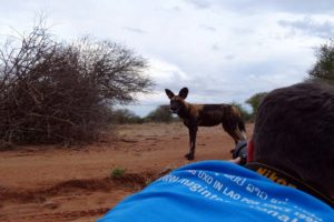Jon taking photos of the passing wild dogs