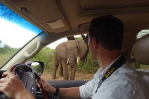 we haven't done many self-driving safaris in Tanzania, we enjoyed being back behind the wheel ourselves