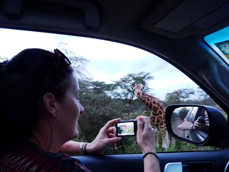 Kat taking photos of the beautiful Rothschild's giraffes