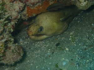 viper moray eel (we think)