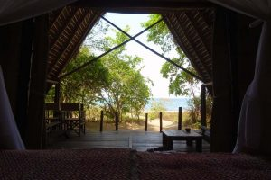 the view from our bed, at night you can hear the bushpigs looking for palmnuts in the undergrowth
