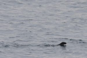 we spotted our first ever otter!