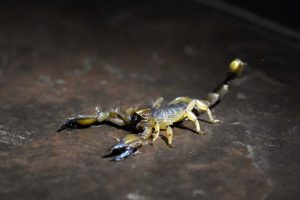 we found quite a big scorpion in the restaurant before our game drive, we relocated him to a safer environment for him