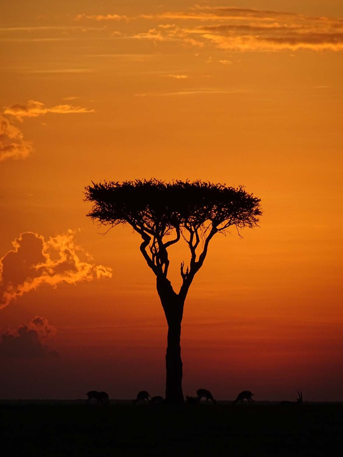 another gorgeous sunset in Africa