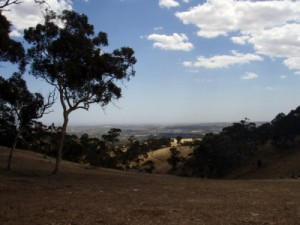views over the MacClaren Vale