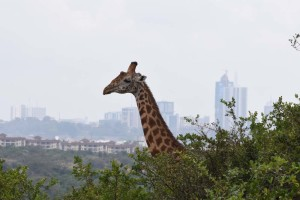 where else can you spot wildlife with a backdrop of the city?