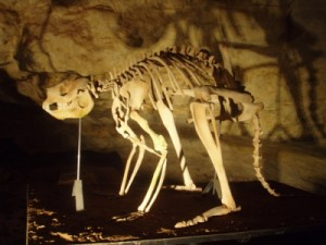 reconstructed skeleton