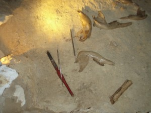 tools to excavate...