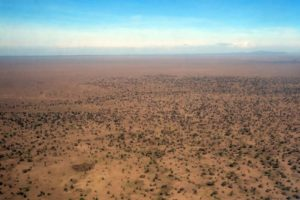 areal view from the start of the Ndutu Plains, you can see where the trees disappear