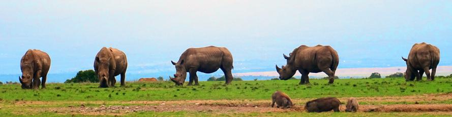 just 5 rhino hanging out...
