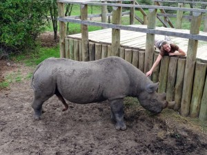 blind rhino Baraka getting excited from an ear scratch