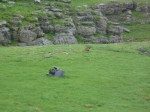 marmot - so cute - wonder if they carry the plague in Europe as well...