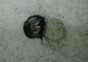 trap door spider - so cool! can you see his trap door?