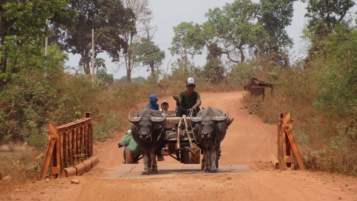 water buffalo pulling a cart, we see many of these on the roads
