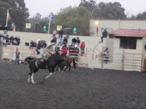 rodeo on another horse