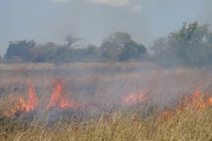 they seem to do a lot of controlled burning here in Tanzania, have not seen that anywhere in Kenya.