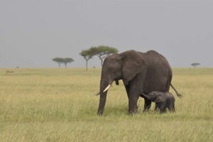 elephant mum with baby