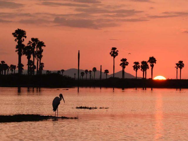 Selous – Lake Mwanze