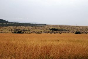 yep, all those little black dots are wildebeest