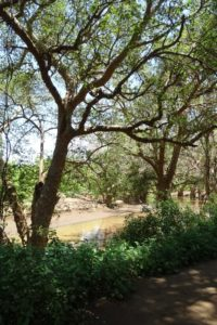 the stunning trees of the Ewaso Nyiro river, a welcome sight after the run without any shade