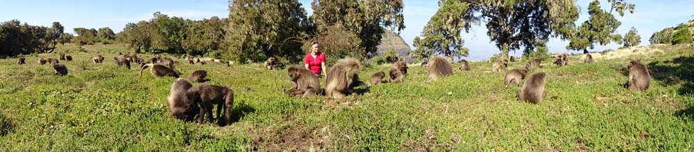 Jude in between lots of gelada monkeys in the Simien Mountains NP
