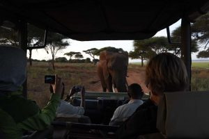 you know it is a special sighting when your guide also starts taking photos