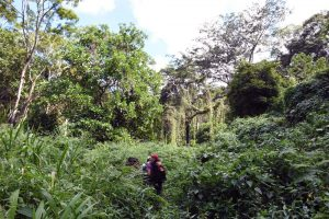 Jude, the guide and the ranger on the way up, looking for birds and monkeys