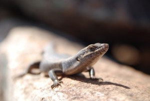 the lizards here are not shy